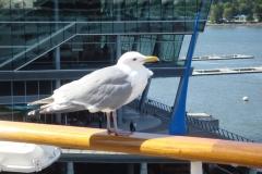 cruise_2011_11