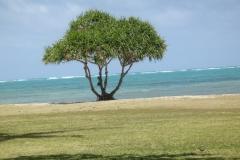 hawaii2012_104