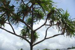 hawaii2012_25