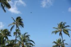 hawaii2012_58