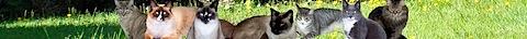 cat_banner.jpg